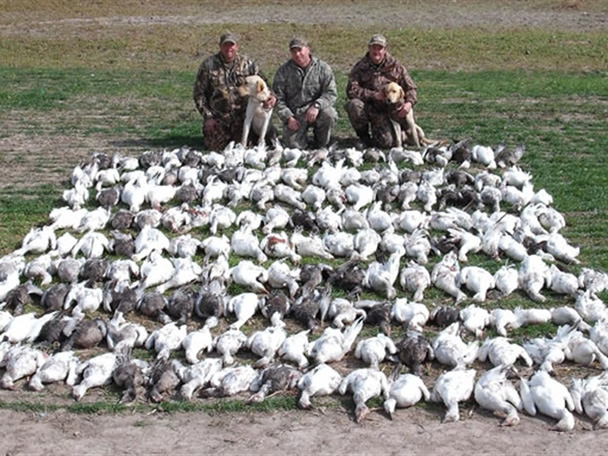 Texas Goose Hunting Guides